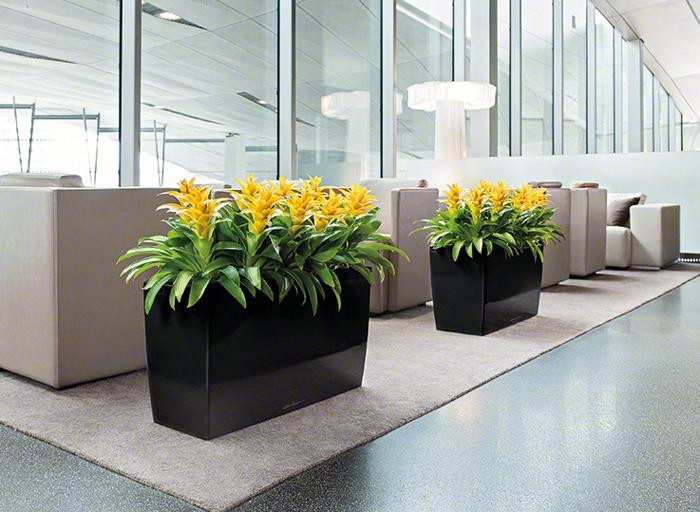 Офисные цветы в горшках
